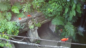 In the Rain Forest pyramid. Red Ibises.