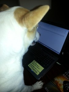 Bella typing